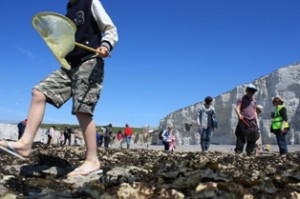 Rockpooling 2012 small